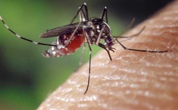 Was tun, wenn Stechmücken oder Wespen stechen??