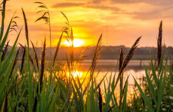 Sonnenaufgang an Gewässer