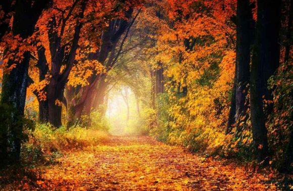 Herbst Allee Weg Laub Baum Blatt Natur Wald