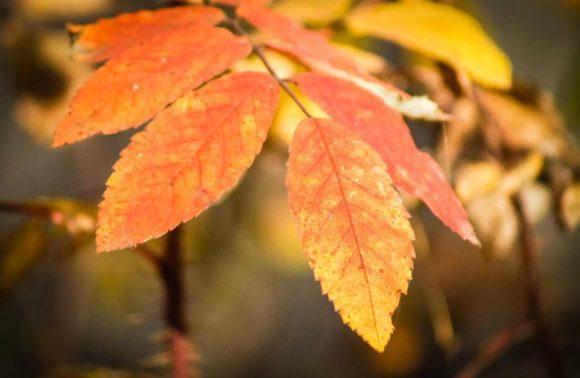 Blatt Herbst Natur Pflanze Orange Gelb Zweig