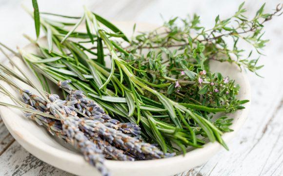 Hildegards Kräutermedizin gegen die Übel unserer Zeit